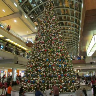 Historical Significance of the Christmas Tree