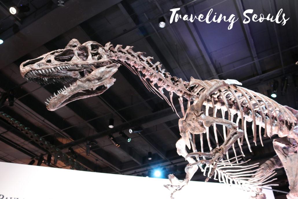 dinosaur bones HMNS Houston Museum of Natural Science Texas