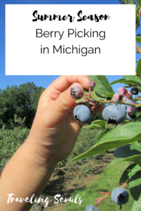Berry Picking in Michigan pinterest graphic vertical