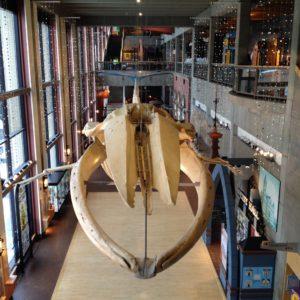 grim grmuseum grand rapids public museum michigan dinosaur whale