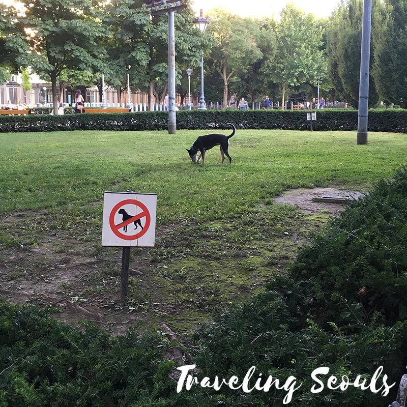 dog pet culture budapest hungary