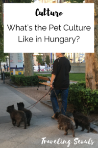 dog-culture-budapest-pinterest-graphic