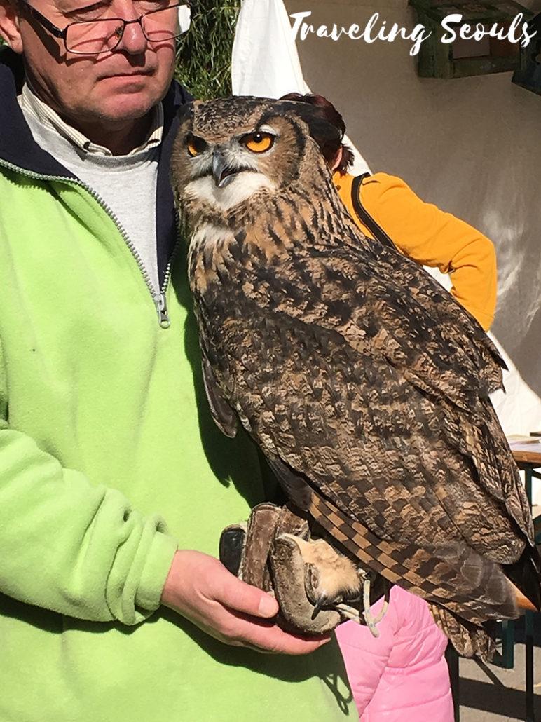 budapest zoo hungary owl